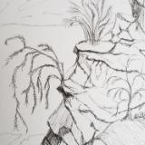 The thirsty plant longs to sip the sweet water flowing in the valley below.  5 1/2 × 7 1/2 sketch on