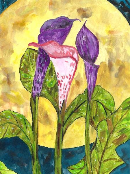 Calla lilies in moonlight